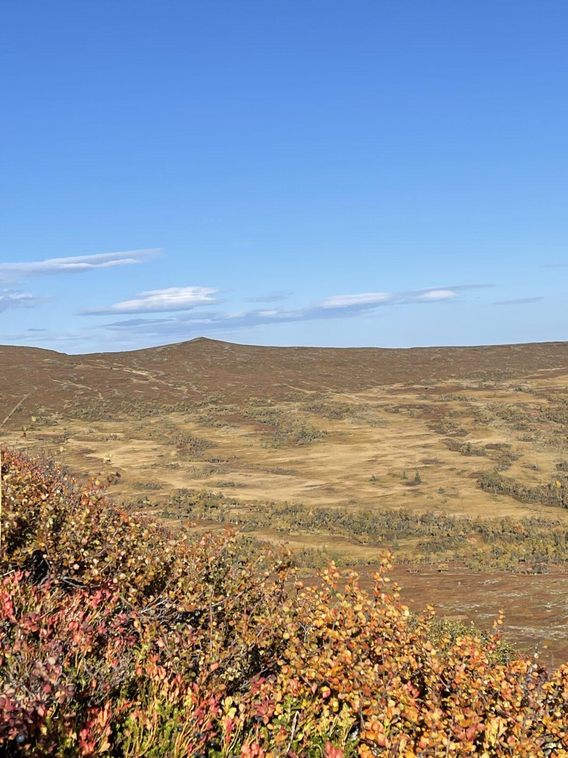 Utsikten vid Särvfjället mot vandringsområdet med flera toppar och oändligt med fin vandring. Här behöver man verkligen inte trängas.