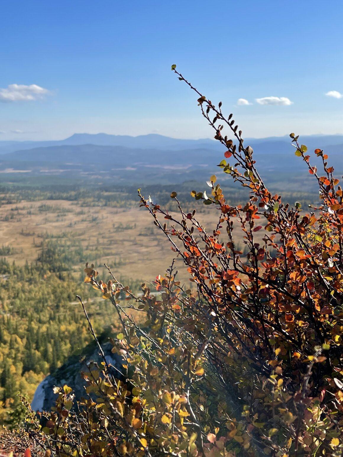 Magiska höstfärger i rött, gult och orange trängs med sommarens gröna färger på växtligheten på berget och långt bort i horisonten syns Sonfjället.