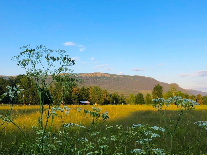 Vemdalen med Högfjället i bakgrunden en solig sommardag.